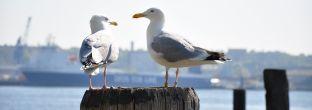 Hamburg: Praktische Tipps