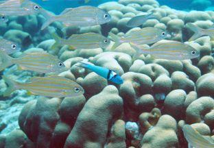 Fische Curacao Hato Flughafen