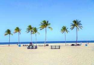 Palmen Fort Lauderdale Flughafen