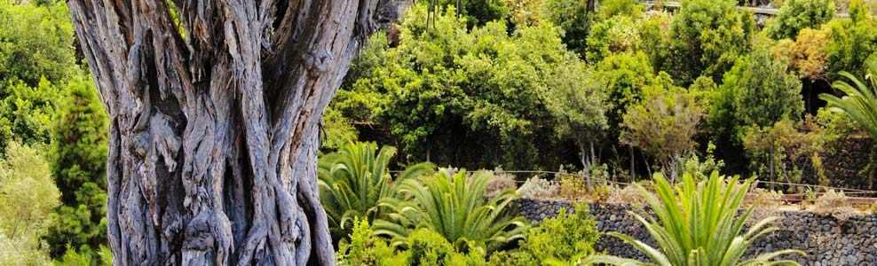 Kanarische Inseln: praktische Tipps