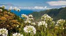 Madeira Reisevorbereitung